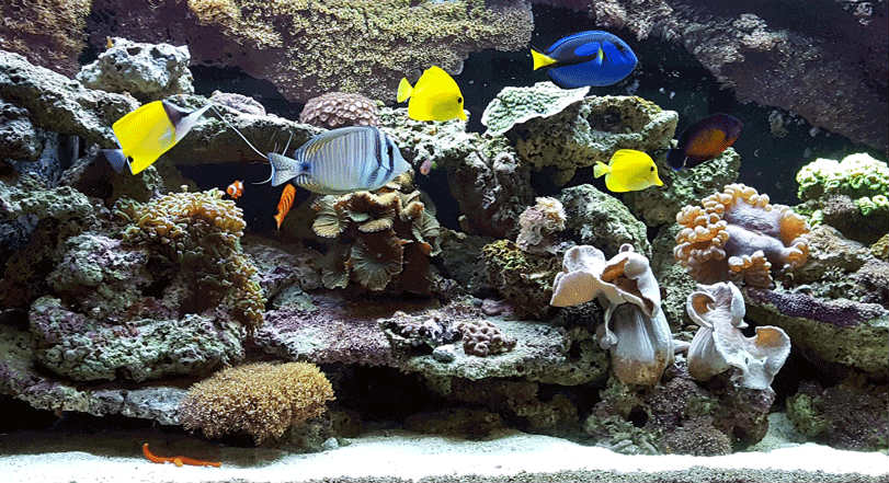 Fish Tank at Vincent Vein